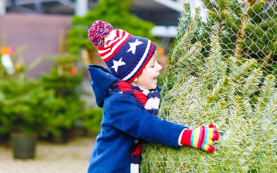 Achetez en ligne votre sapin de Noël