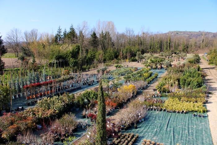 Jardinerie, pépinière Morestel 38, Isère